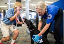The Laws on Service Dogs in Nebraska