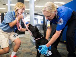 The Laws on Service Dogs in Nebraska
