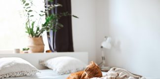 Pets and Plants: Which Are the Best Pet-Friendly Plants for Your Home?