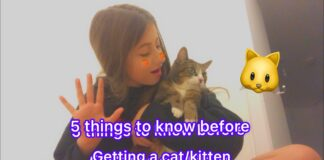 5 Points to Consider Before Getting a Cat